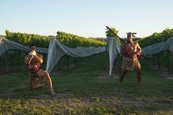 2度目に披露された「ハカ」は、これから色づき始める黒葡萄のピノ・ノワールに鳥よけネットが準備されたばかりの畑の前で。
