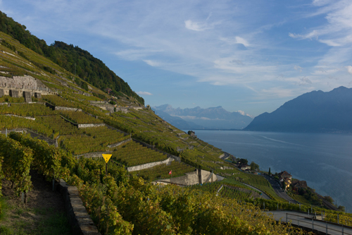 72_photo3-2_Vignes-Lavaux